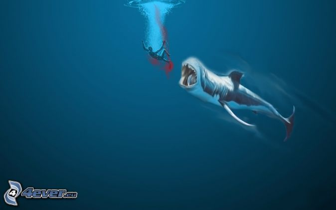 Žralok , človek , krv , more