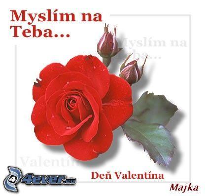 Láska , ruža