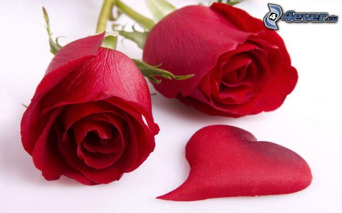 červené ruže, srdiečko