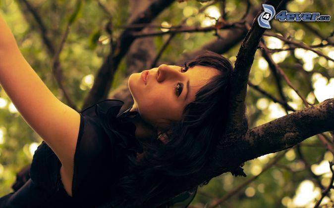 brunetka, strom