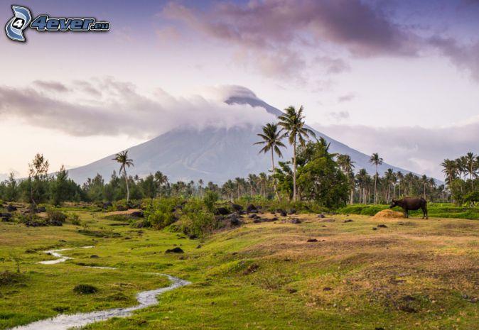 Mount Mayon, palmy, byvol, potôčik, Filipíny