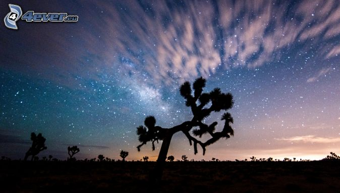 Joshua Tree National Park, siluety stromov, nočná obloha