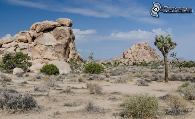 Joshua Tree National Park, skaly, stromy