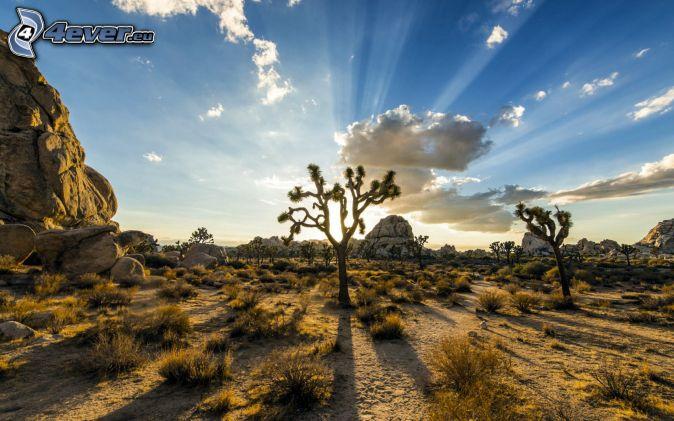 Joshua Tree National Park, stromy, skaly, kríky, západ slnka, slnečné lúče