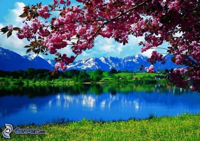 jarná krajinka, kvitnúci strom, jazero, zasnežené hory