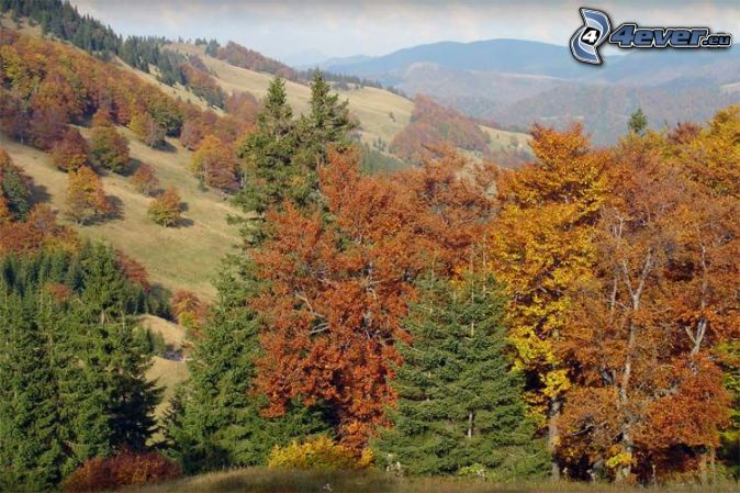 Príroda jeseň