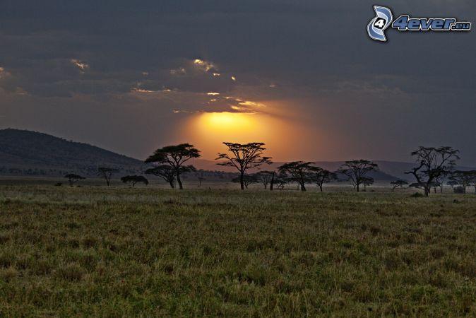 savana, siluety stromov, západ slnka