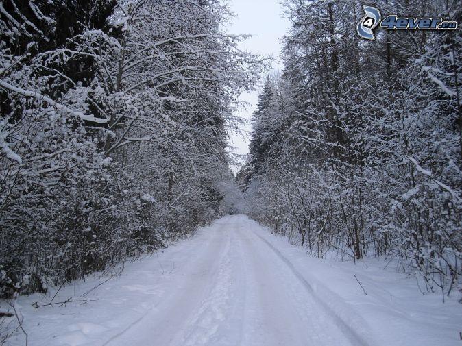 zasnežený les, lesná cesta