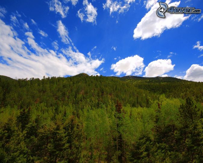 les, pohorie, oblaky