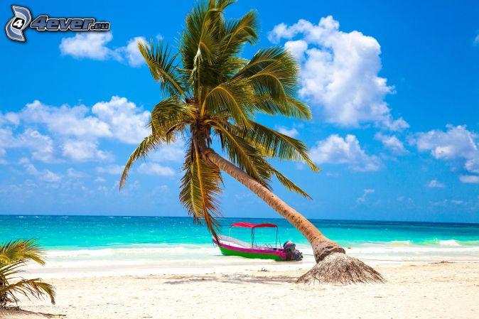 palma nad piesočnou plážou, šíre more, loď