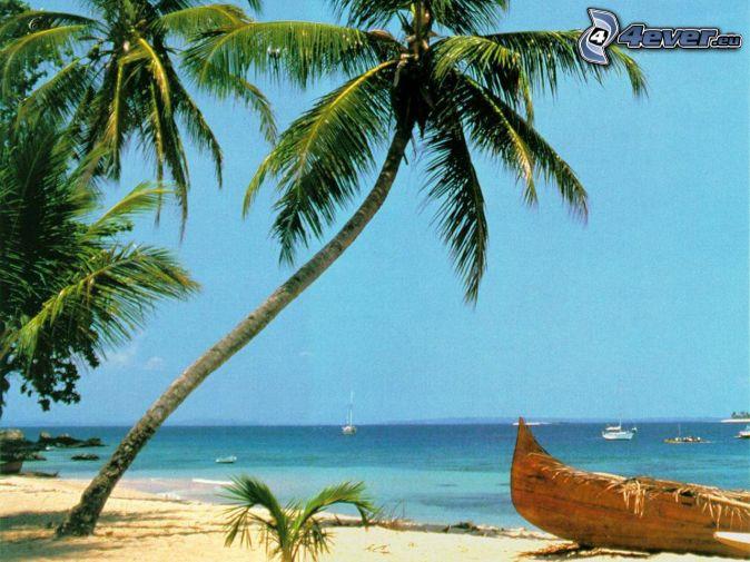 starý čln na pláži, palma, more, piesok