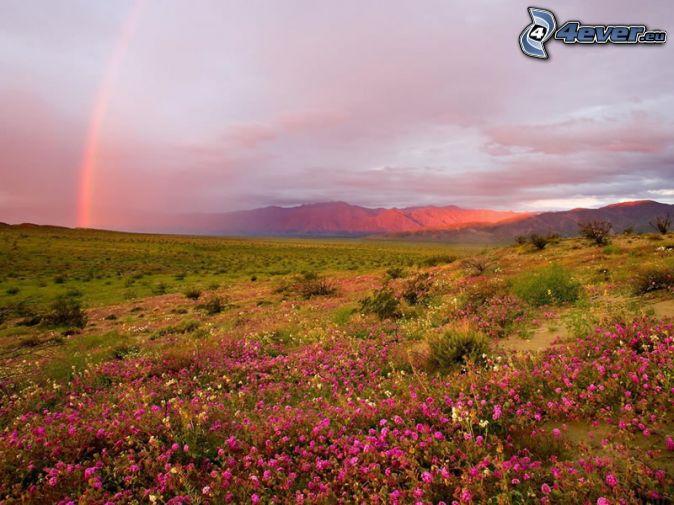 dúha, ružové kvety