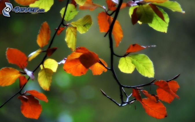 farebné listy, konáre