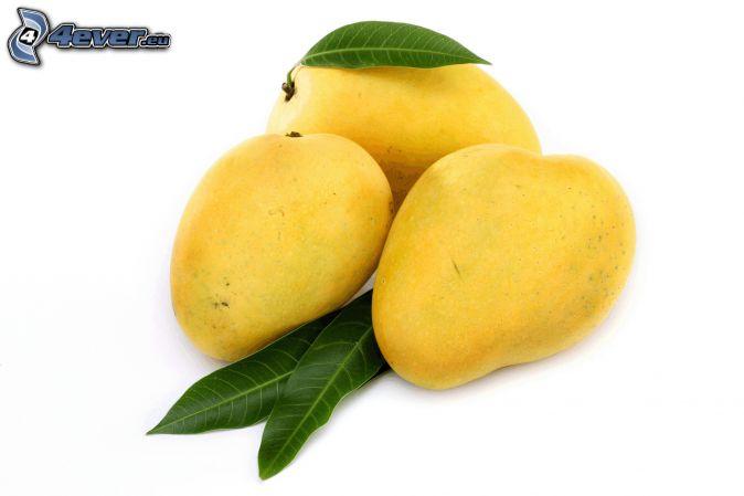 mango, zelené listy