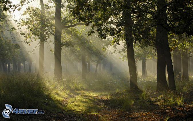 slnečné lúče v lese