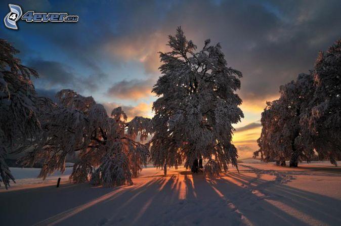 Zalazak sunca  - Page 6 Zapad-slnka-za-stromom,-zima,-sneh-151740