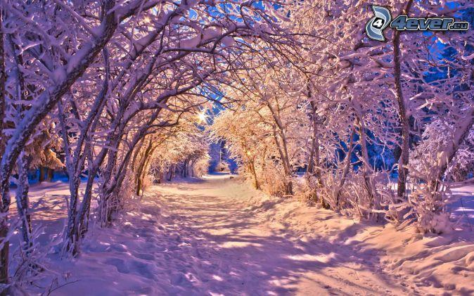 zasnežená cesta, zasnežené stromy