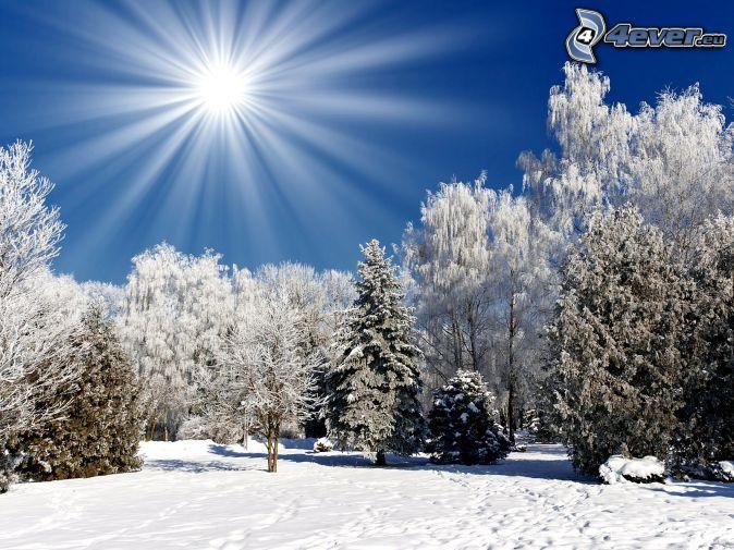 zasnežené stromy, slnko