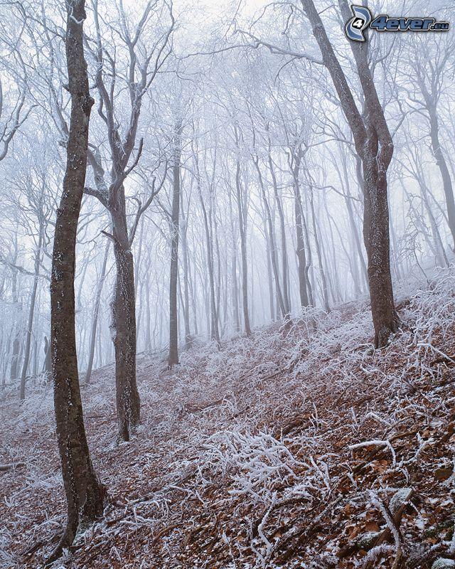 zasnežený les, hmla