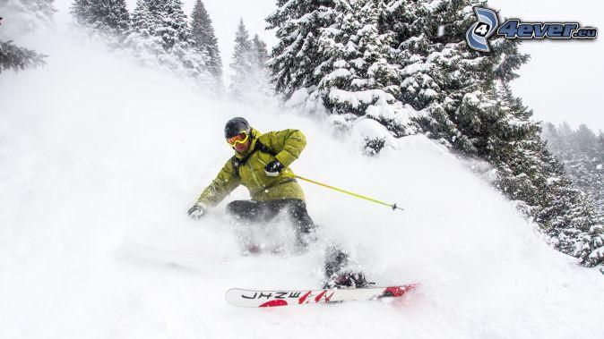 lyžovanie, zasnežené stromy
