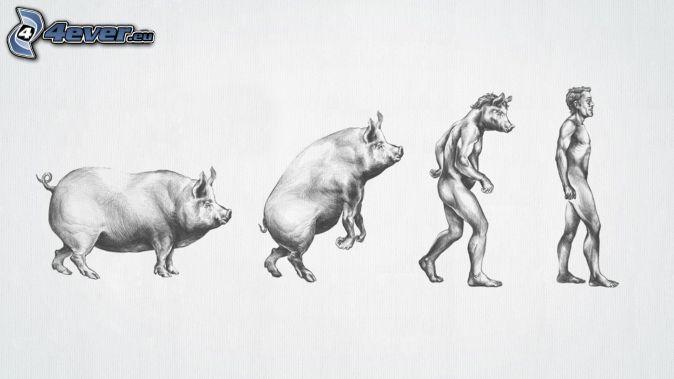 evolúcia, prasa, človek