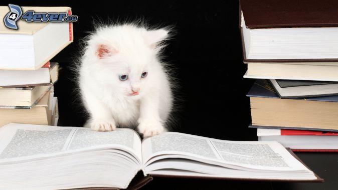 Mačiatko knihy