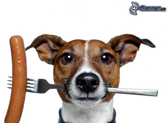 pes, vidlička, párok