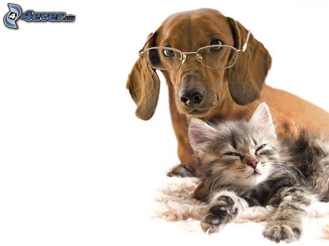 pes a mačka, okuliare