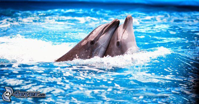 delfíny, láska, voda