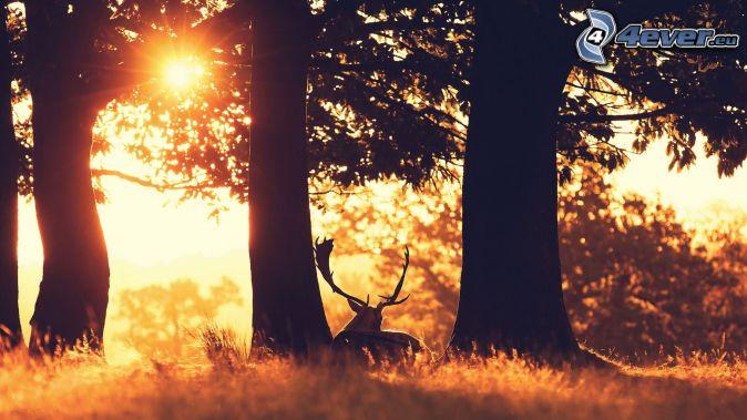 jeleň, slnko, stromy