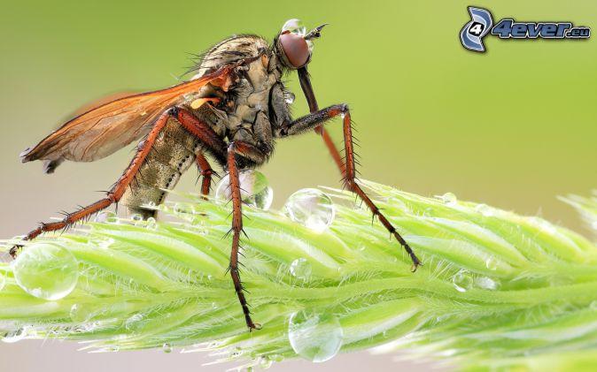 komár, list, kvapky vody