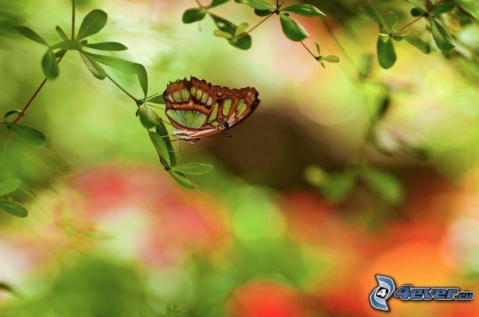 motýľ, konárik