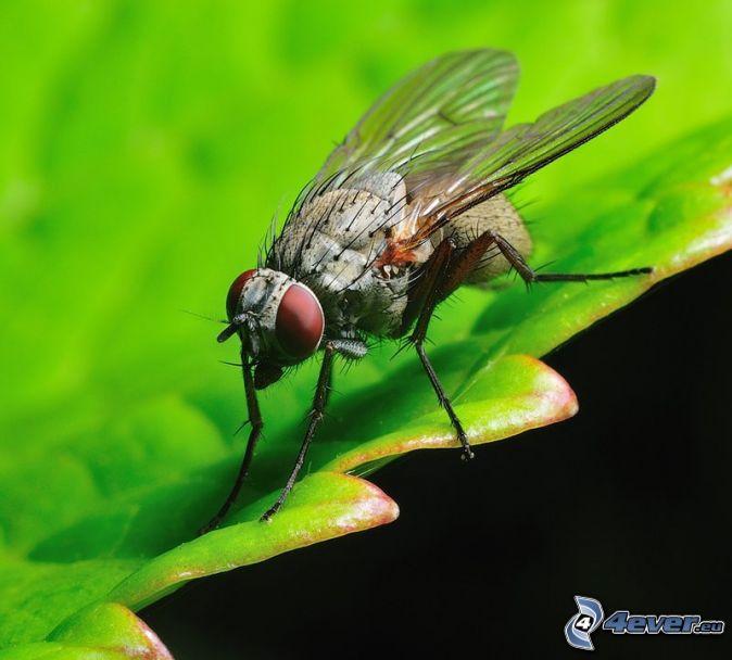 Mucha list hmyz