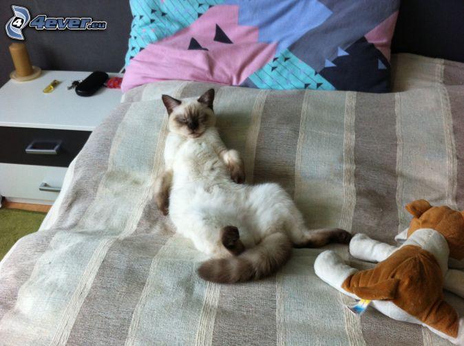 britská mačka, spánok, posteľ, plyšový pes