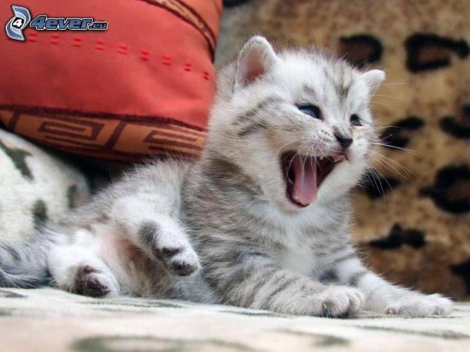 mačiatko, zívanie