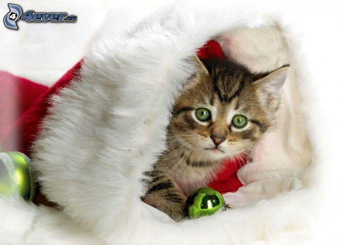 mačka, mikulášska čiapka, vianočné gule