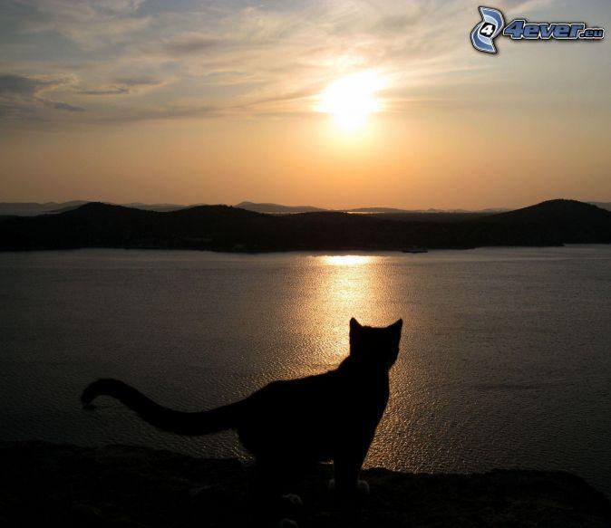 silueta mačky, západ slnka nad jazerom