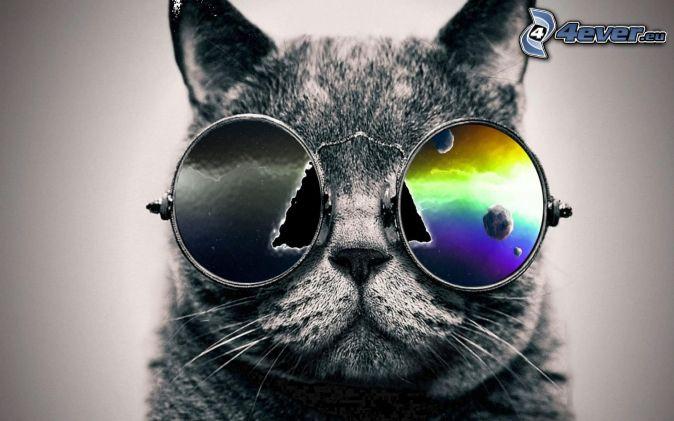 sivá mačka, slnečné okuliare