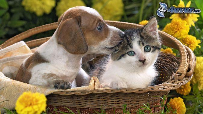 pes a mačka, košík