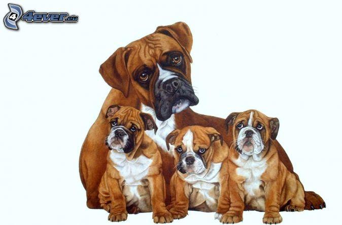 Boxer, šteniatka boxerov