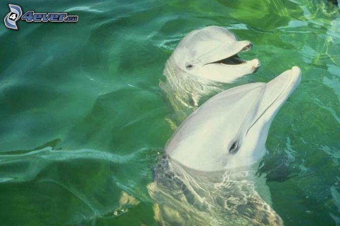 delfíny, voda