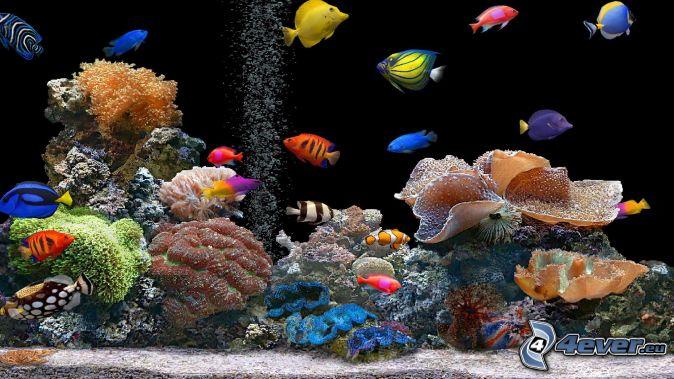 koralové rybky, farebné ryby, koraly, akvárium