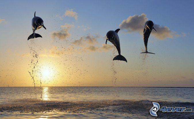 skákajúce delfíny, západ slnka, more