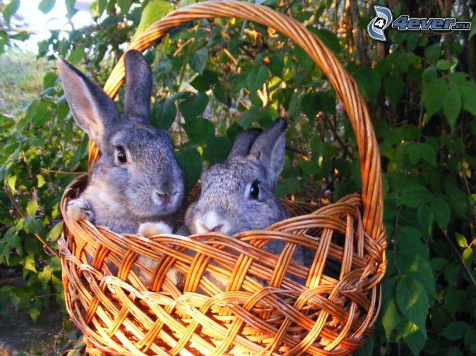 zajačiky, košík