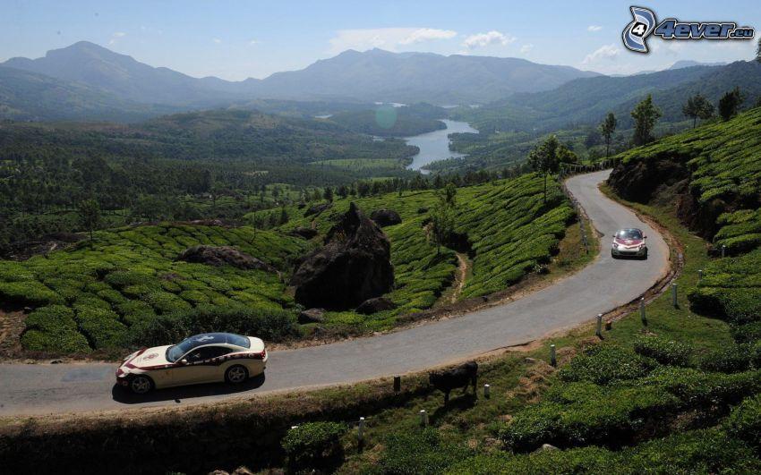 autá, cesta, príroda