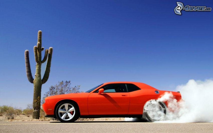 Dodge Challenger SRT, burnout, dym, kaktus