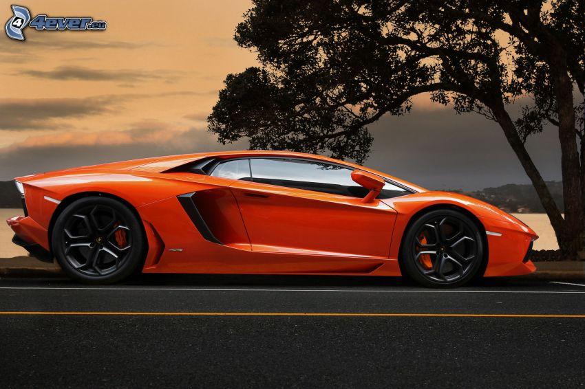 Lamborghini Aventador, strom, cesta