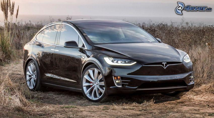 Tesla Model X, pole, suchá tráva