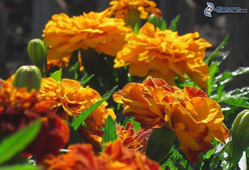 žlté kvety