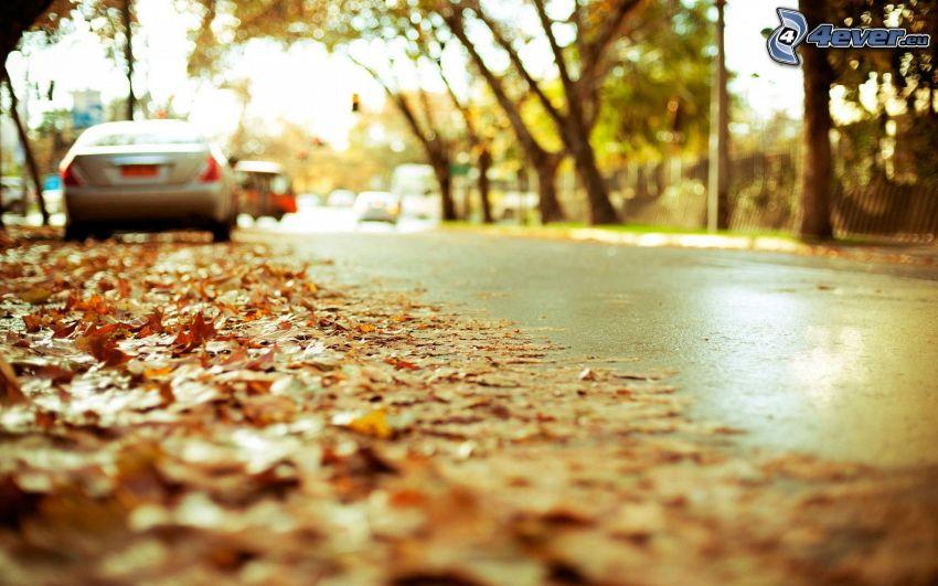 cesta, autá, jesenné lístie